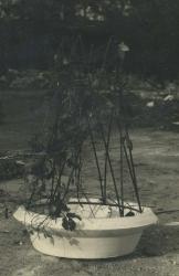 1974. Цветочница с прутьями / Puķupods ar klūgām
